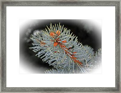 Frost Drops Framed Print by Bob Hislop