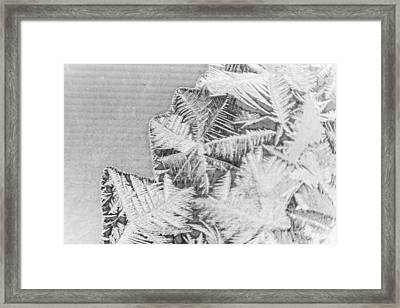 Frost In Black And White Framed Print by Dana Moyer