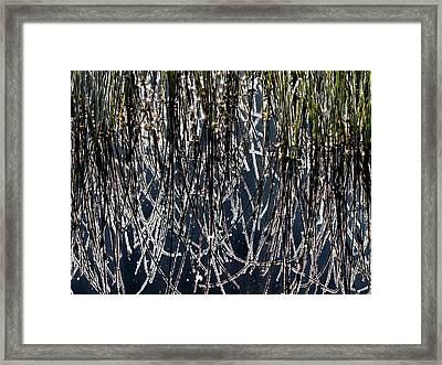 Frost Framed Print by Leland D Howard