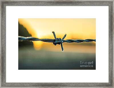 Frost On Barbed Wire At Sunrise Framed Print by Michael Cross