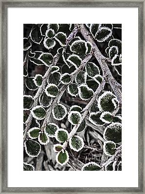 Frost On Plant Branch In Late Fall Framed Print by Elena Elisseeva