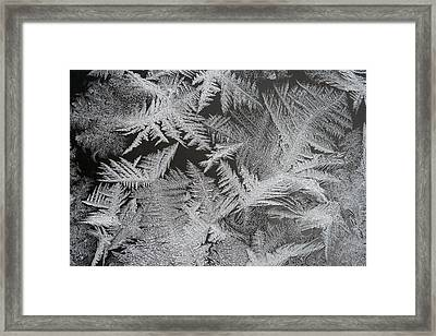 Frost Patterns Framed Print by Carolyn Reinhart