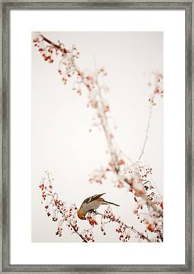 Frosted Berry Delight Framed Print by Marie-Dominique Verdier