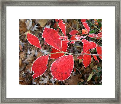 Framed Print featuring the photograph Frosted Blueberry Leaves by William Tanneberger