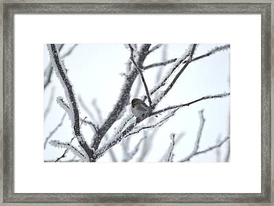 Framed Print featuring the photograph Frosted Branches by Dacia Doroff