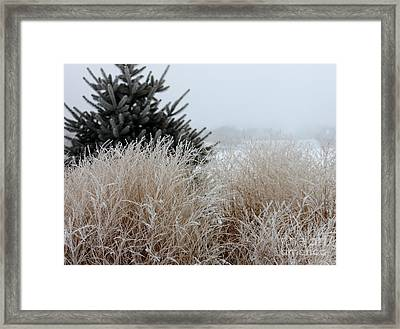 Frosted Grasses Framed Print