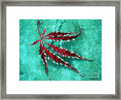 Frosted Japanese Maple Framed Print