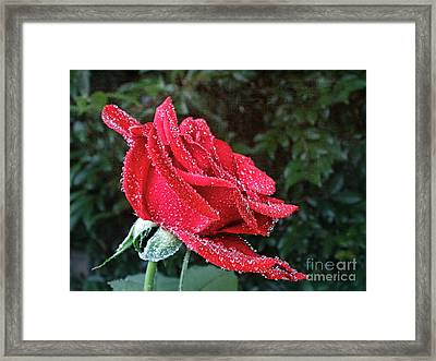 Frosted Framed Print
