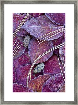 Framed Print featuring the photograph Frosted Leaves by Alan L Graham