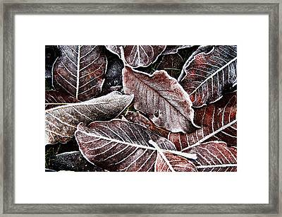 Frosted Leaves Framed Print