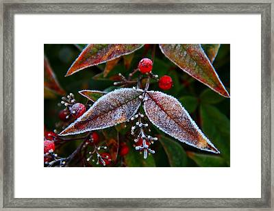 Frosted Nandina Leaves Framed Print