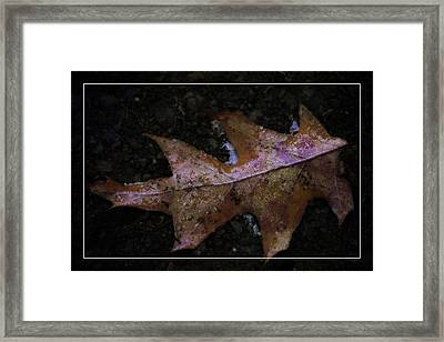 Framed Print featuring the photograph Frosted Oak by Tikvah's Hope