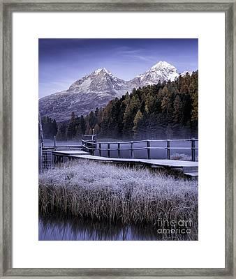Frosted Reeds Framed Print