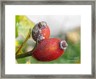 Framed Print featuring the photograph Frosted Rosehips by Nina Silver