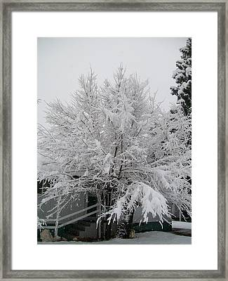 Frosted Tree Framed Print by Jewel Hengen