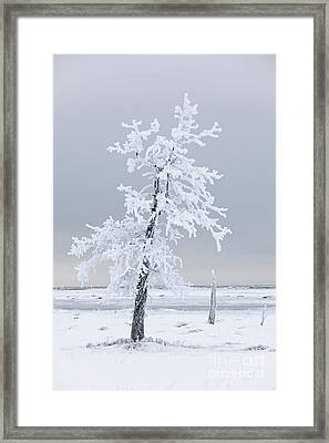 Frosted Tree Framed Print by Tim Grams