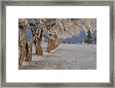 Framed Print featuring the photograph Frosted Trees by Fran Riley