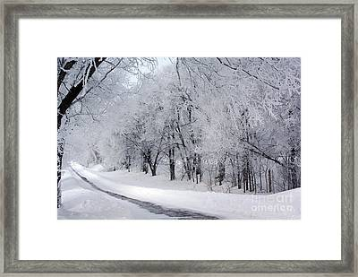 Frosted Trees Path Framed Print