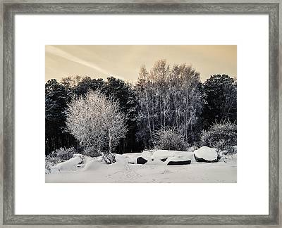Frosted Trees Framed Print by Vladimir Kholostykh