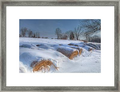 Frosted Wheat Framed Print by Bill Wakeley