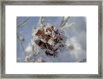 Frosted Willow Rose Framed Print by Cathy Mahnke