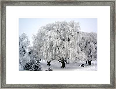 Frosted Willow Trees Framed Print