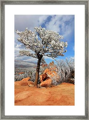 Frosted Wonderland 3 Framed Print by Diane Alexander