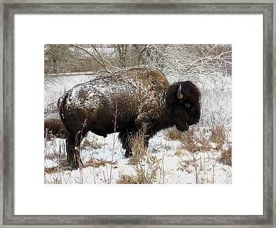 Frosted Woolly Framed Print by David Dunham