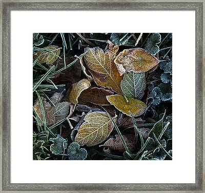 Frosty Autumn Leaves Framed Print
