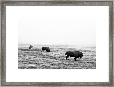 Frosty Bison Framed Print by Mark Kiver