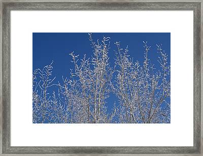 Framed Print featuring the photograph Frosty Blue Sky by Sheila Byers