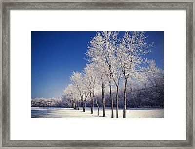 Frosty Framed Print by Bryan Scott