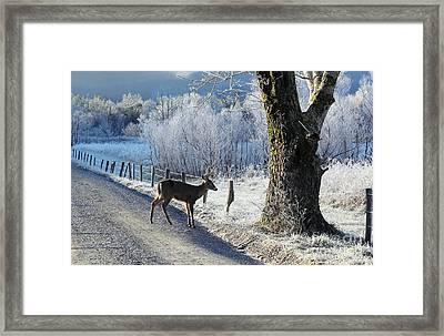 Frosty Cades Cove II Framed Print
