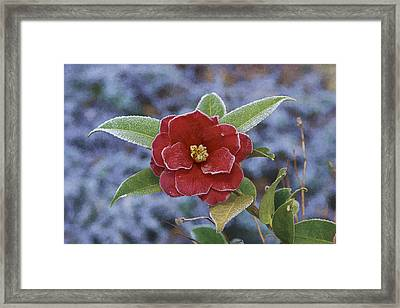 Framed Print featuring the photograph Frosty Camellia by Gregory Scott