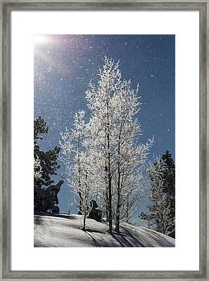 Frosty Colorado Aspen Framed Print