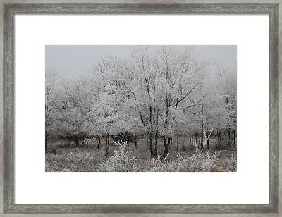 Frosty Day Framed Print