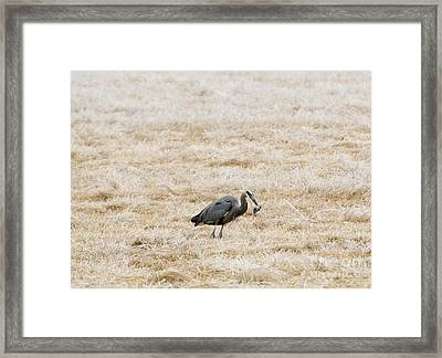 Frosty Dinner Framed Print by Mike  Dawson