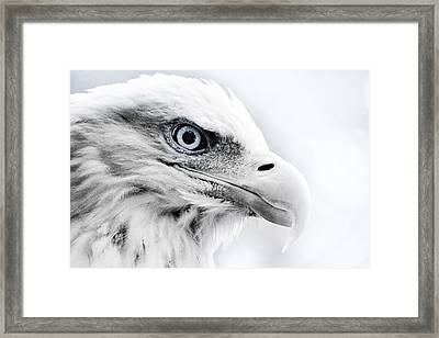Frosty Eagle Framed Print