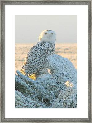 Frosty Eyes Framed Print