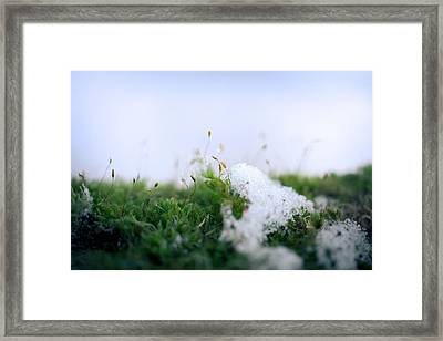 Frosty In The Land Of Small Framed Print