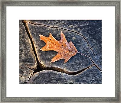 Framed Print featuring the photograph Frosty Leaf On Tree Trunk by Gary Slawsky
