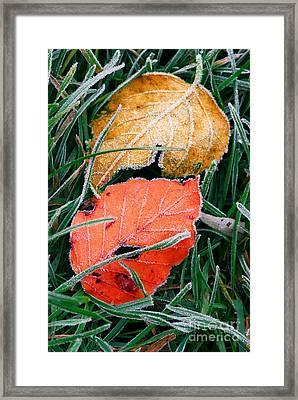Frosty Leaves Framed Print