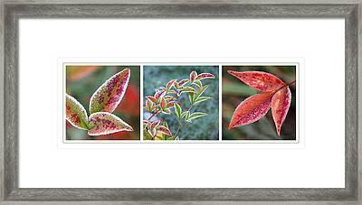 Frosty Leaves Framed Print by Gill Billington