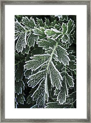 Frosty Leaves Macro Framed Print by Elena Elisseeva