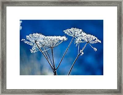 Frosty Light Framed Print