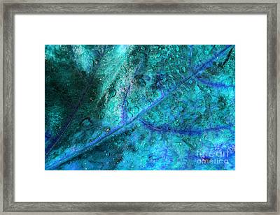 Frosty Morning Framed Print by Angela Bruno