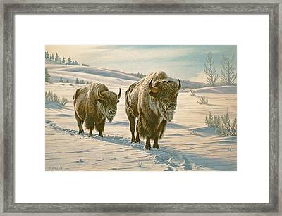 Frosty Morning - Buffalo Framed Print