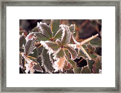 Frosty Morning Framed Print by Dave Woodbridge