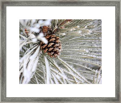 Frosty Norway Pine Framed Print by Penny Meyers