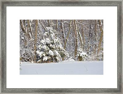 Framed Print featuring the photograph Frosty Pine by Dacia Doroff
